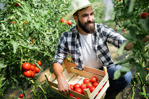 friendly-farmer-at-work-in-greenhouse-H2UHWEH-1.jpg